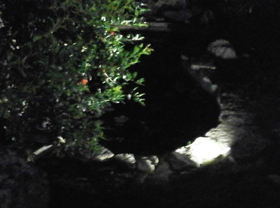 Faretti led da esterno giardini verdi